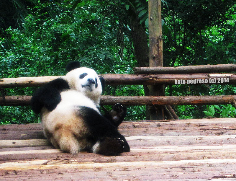 This panda is my spirit animal.